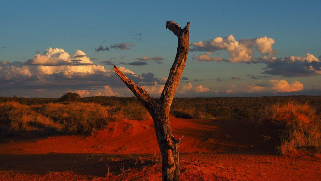 Totes Holz in der Kalahari