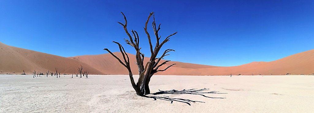 Toter Baum im Sossusvlei