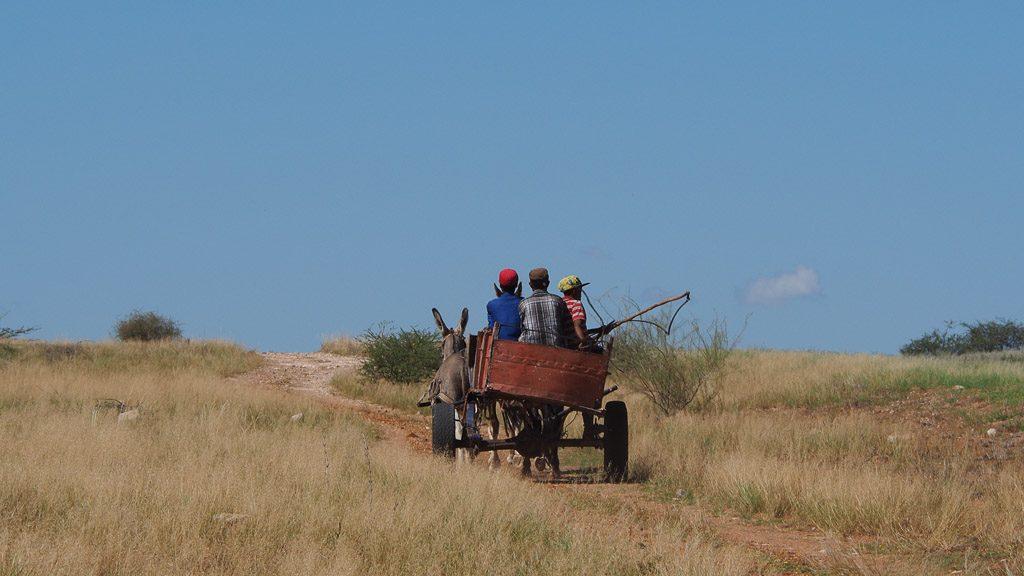 Eselskarren in der Steppe von Namibia