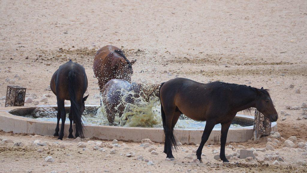 Wildpferde am Wasserloch bei Aus in Namibia