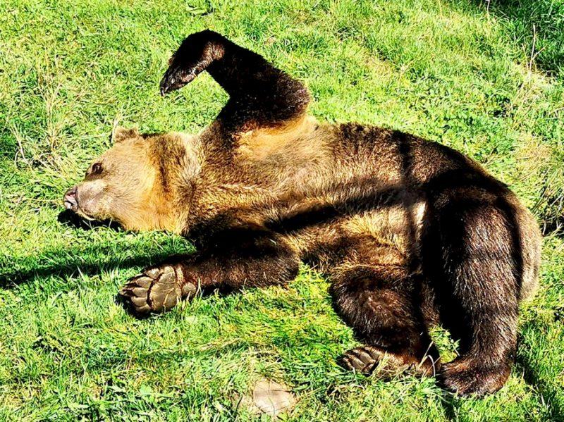 Foto: Alternativer Wolf und Bärenpark