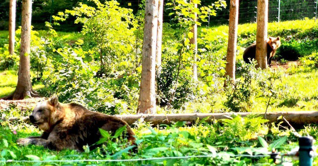 Alternativer Wolf und Bärenpark - Bären im Alternativen Wolf und Bärenpark imSchwarzwald