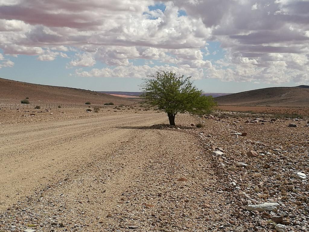 Einsamer Baum in Namibia am Straßenrand