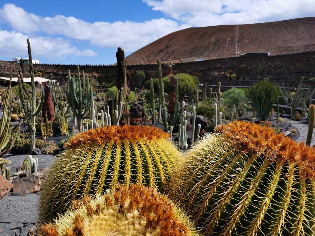 Mietwagen Rundreise - Kaktusgarten auf Lanzarote - César Manrique