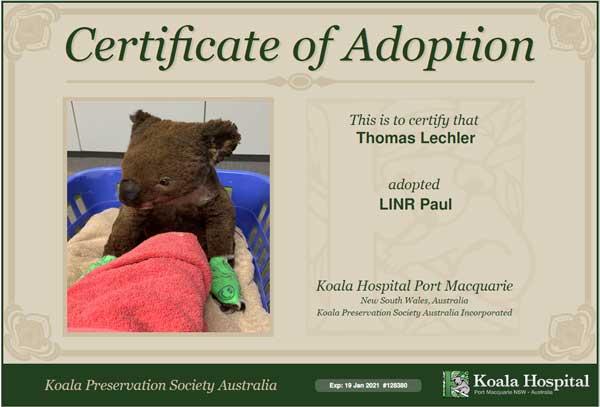 Reiseblogger Lechler Adoptionsurkunde KoalaConservation