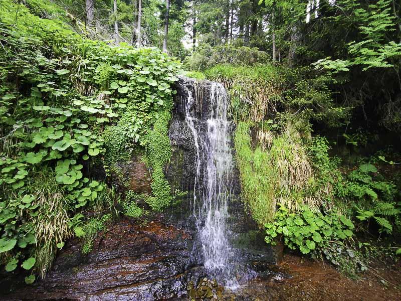 Sankenbach Wasserfälle am Kniebis im Nationalpark Schwarzwald